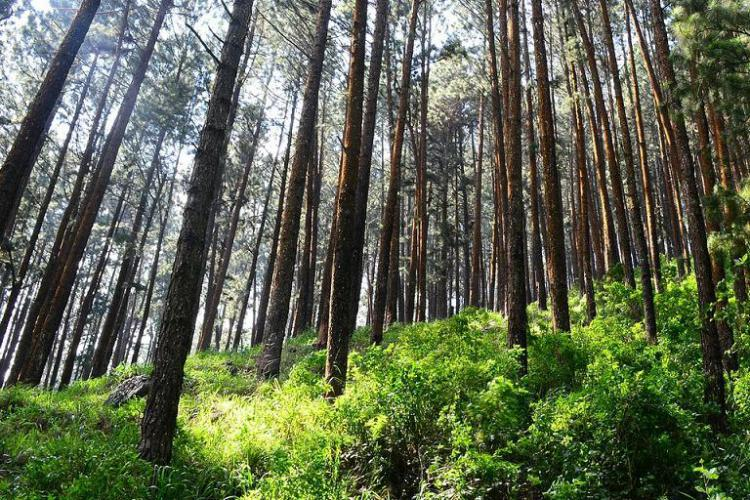 Here's how to shift focus to natural capital