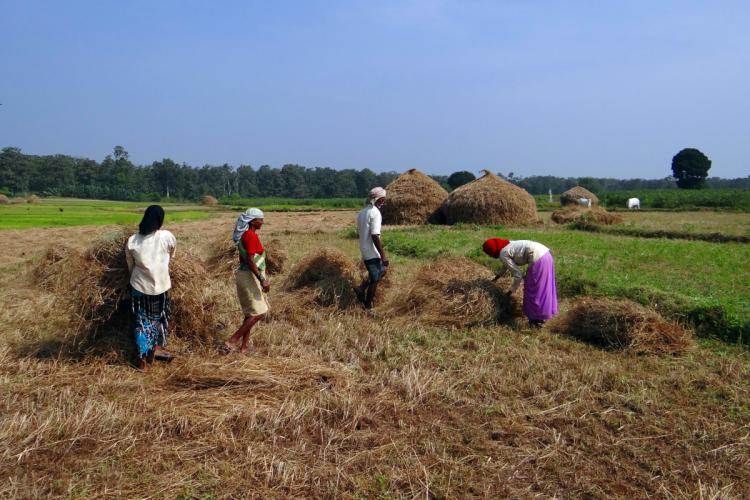Biomass for All: chemical compounds out of paddy/rice straw