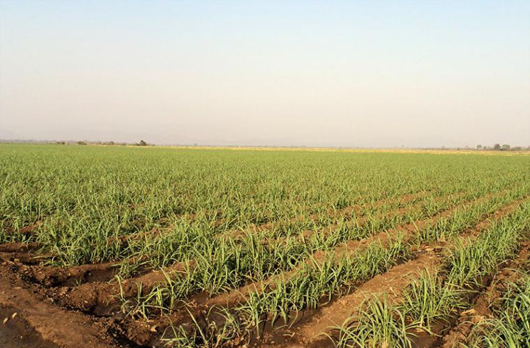 Excessive use of fertilizers make soil impervious and lose their absorption capacity