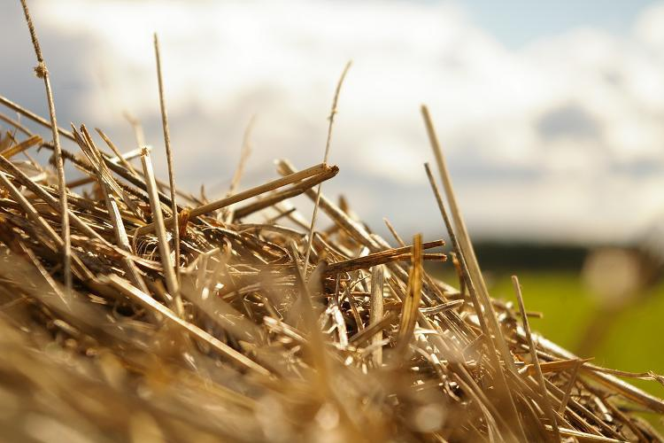 Biomass for All: Share your ideas for bio-based materials out of paddy/rice straw